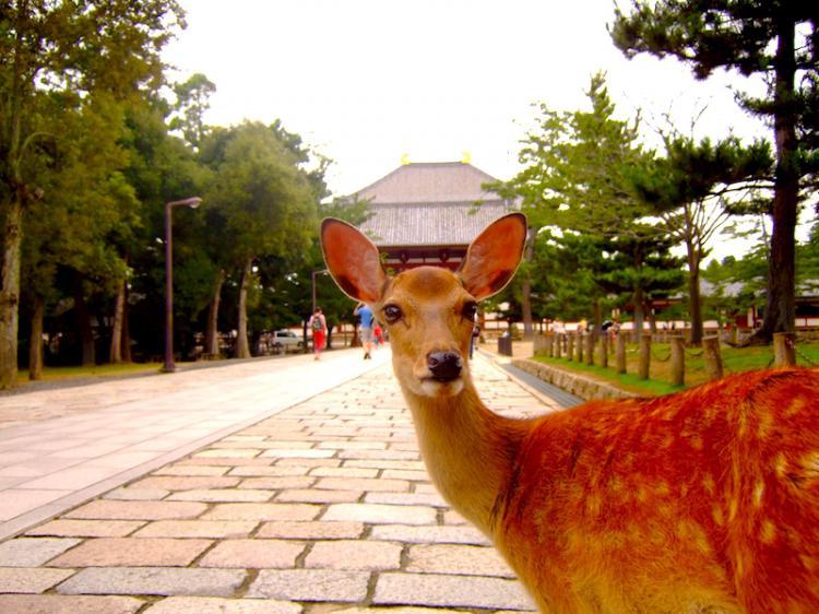「奈良公園」的圖片搜尋結果